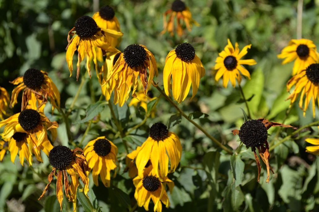 Verwelkende Blumen